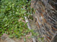 Detail odvodnění - opěrná zeď